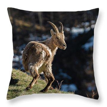 Ibex On The Mountains Throw Pillow