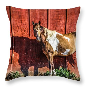 #0783 - Buckskin On Red Throw Pillow