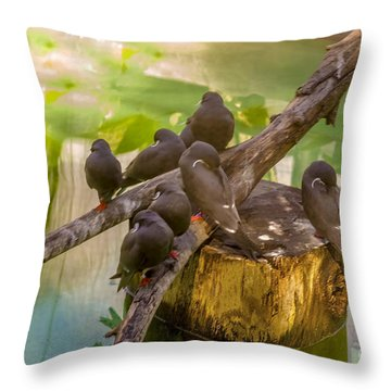 Throw Pillow featuring the photograph Inca Terns by Richard J Thompson