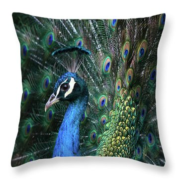 Indian Peacock With Tail Feathers Up Throw Pillow