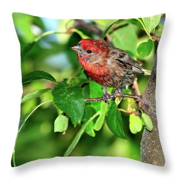 Inquisitive Throw Pillow by Betty LaRue