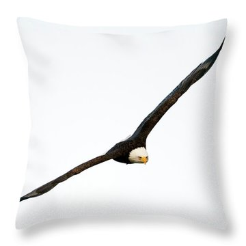 Throw Pillow featuring the photograph Intense Stare by Mike Dawson