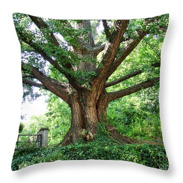 Throw Pillow featuring the photograph Inwood Ginkgo  by Cole Thompson