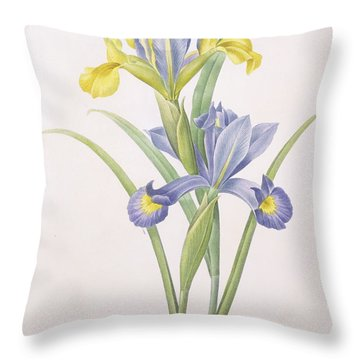 Iris Xiphium Throw Pillow