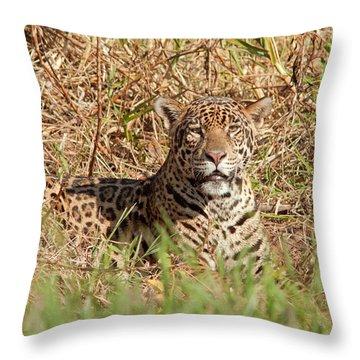 Jaguar Watching Throw Pillow