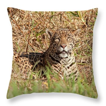 Jaguar Watching Throw Pillow by Aivar Mikko