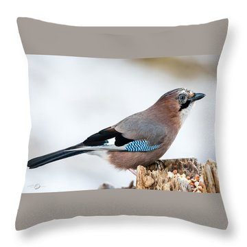 Jay In Profile Throw Pillow by Torbjorn Swenelius