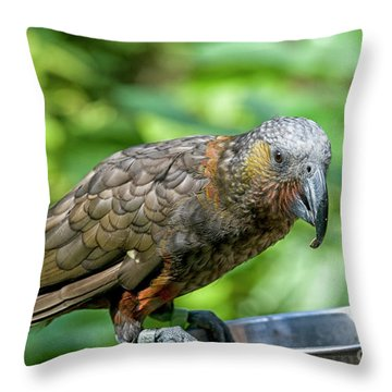Throw Pillow featuring the photograph Kaka by Patricia Hofmeester