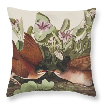 Key West Dove Throw Pillow by John James Audubon
