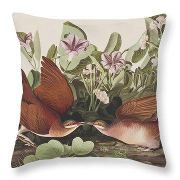 Key West Dove Throw Pillow