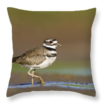 Throw Pillow featuring the photograph Killdeer Walking By by Bryan Keil