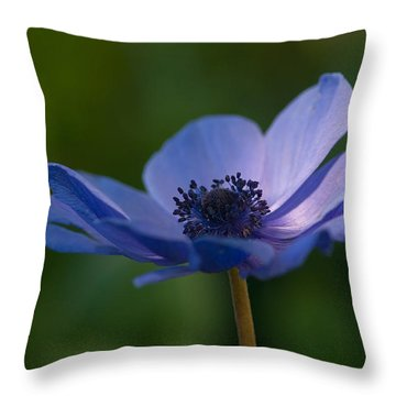 Kissed By The Light Throw Pillow by Carolyn Dalessandro