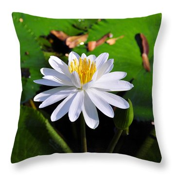 Lady Of The Lake Throw Pillow by David Lee Thompson