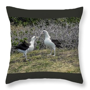 Laysan Albatross Hawaii #2 Throw Pillow