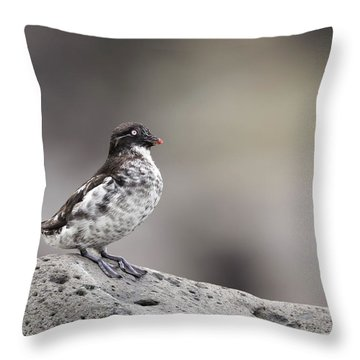 Least Auklet Throw Pillow