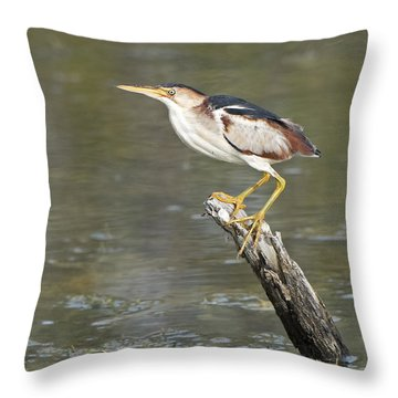 Least Bittern Throw Pillow