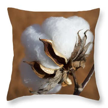 Limestone County Cotton Boll Throw Pillow by Kathy Clark