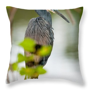 Throw Pillow featuring the photograph Little Blue Heron by Christopher Holmes