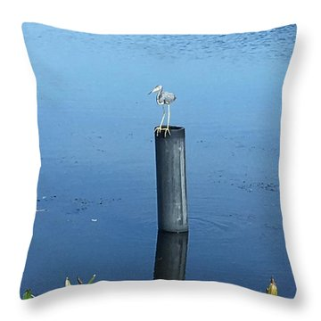 Throw Pillow featuring the photograph Little Blue Heron by Kay Gilley