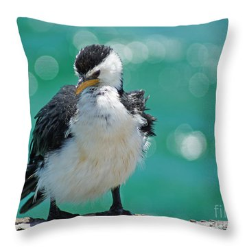 Little Pied Cormorant I Throw Pillow