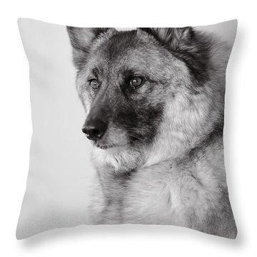 Dog Loki Throw Pillow