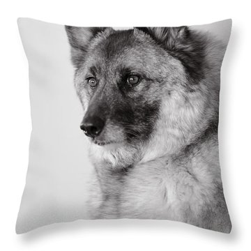 Dog Loki Throw Pillow