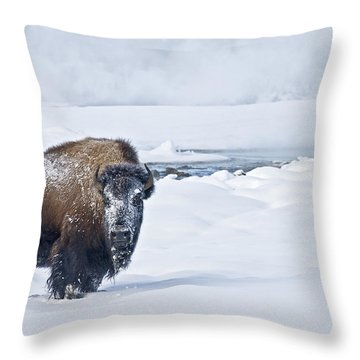 Lone Bison Throw Pillow