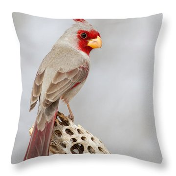 Pyrrhuloxia On Cholla  Throw Pillow