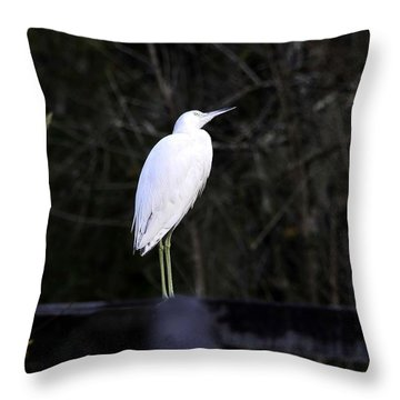 Looking Throw Pillow by David Lee Thompson