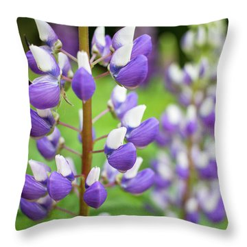 Throw Pillow featuring the photograph Lupine Blossom by Robert Clifford