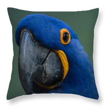 Macaw Throw Pillow by Daniel Precht