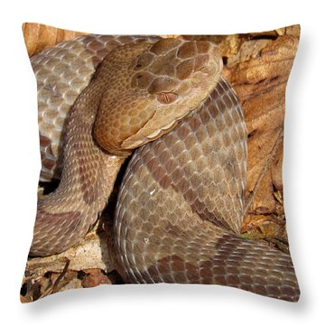 Macro Copperhead Throw Pillow