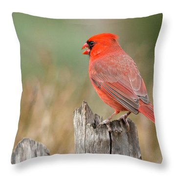 Throw Pillow featuring the photograph Male Cardinal by David Waldrop