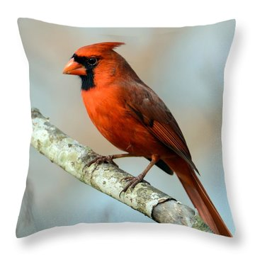 Male Cardinal Throw Pillow by Debbie Green