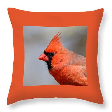 Male Cardinal Throw Pillow by Diane Giurco