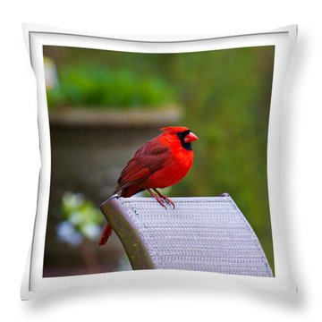 Throw Pillow featuring the photograph Male Cardinal by Robert L Jackson