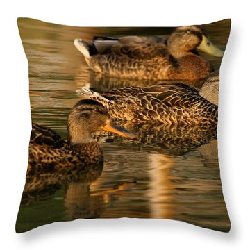 Mallards Swimming In The Water At Magic Hour Throw Pillow