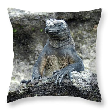 Throw Pillow featuring the photograph Marine Iguana, Amblyrhynchus Cristatus by Breck Bartholomew
