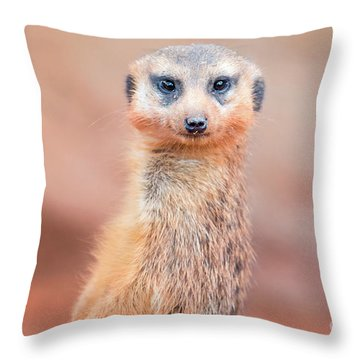 Meerkat Throw Pillow by Stephanie Hayes