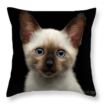 Mekong Bobtail Kitty With Blue Eyes On Isolated Black Background Throw Pillow