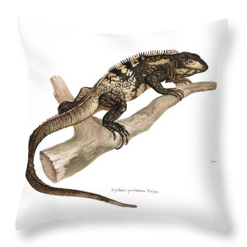 Throw Pillow featuring the drawing Mexican Spiny-tailed Iguana, Ctenosaura Pectinata by Elsasser