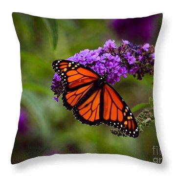 Monarch Throw Pillow by Brenda Bostic