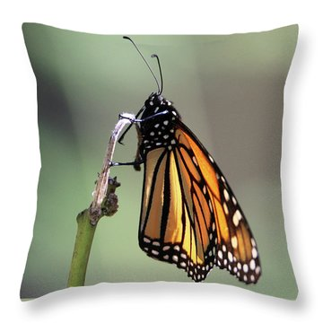 Monarch Butterfly Stony Brook New York Throw Pillow