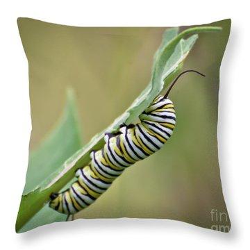 Throw Pillow featuring the photograph Monarch Caterpillar by Kerri Farley