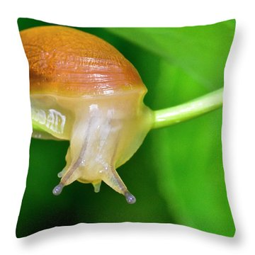 Morning Snail Throw Pillow