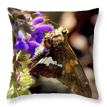 Moth Snack Throw Pillow