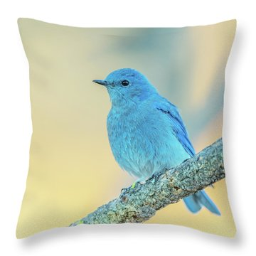 Throw Pillow featuring the photograph Mountain Bluebird by Angie Vogel