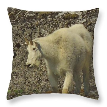 Mountain Goat Ewe Throw Pillow
