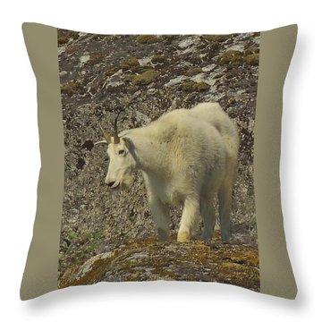 Mountain Goat Ewe Throw Pillow