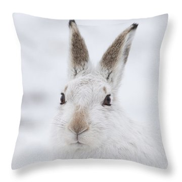 Mountain Hare In The Snow - Lepus Timidus  #1 Throw Pillow